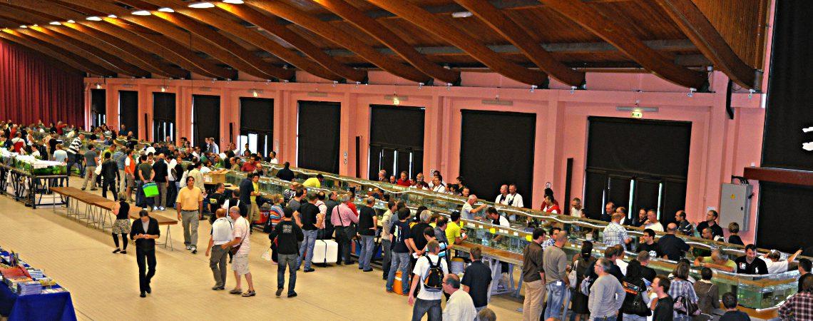 Le congrès 2014: le compte-rendu en images.