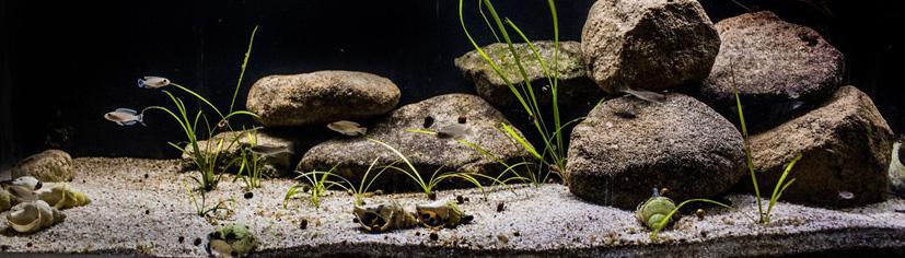 Biotope Tanganyika
