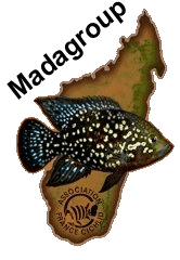 logo-madagroup