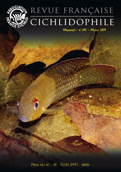 cichlidé Parananochromis longirostris